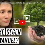 STRG_F: Bäume gegen Klimawandel - Was steckt hinter den Versprechen?