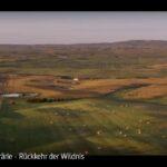 ARTE-Doku: Die Prärie - Rückkehr der Wildnis