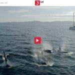 3sat-Doku: Die Sprache der Wale