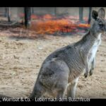 ARTE-Doku: Koala, Wombat & Co. - Leben nach dem Buschfeuer