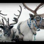 ARTE-Doku: Rentiere auf dünnem Eis
