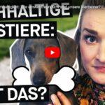 PULS Reportage: Haustiere & Nachhaltigkeit - Wie umweltfreundlich sind unsere Vierbeiner?