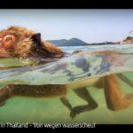 ARTE-Doku: Affen in Thailand - Von wegen wasserscheu!