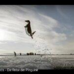 ARTE-Doku: Antarktis - Die Reise der Pinguine