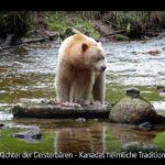 ARTE-Doku: Der Wächter der Geisterbären - Kanadas heimliche Tradition