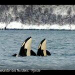 ARTE-Doku: Fjorde - Naturwunder des Nordens