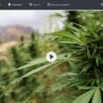 ZDF-Doku: Millionengeschäft Cannabis - Marokkos illegaler Exportschlager