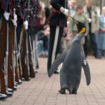 Ein Pinguin ist Brigadegeneral ehrenhalber der königlichen Garde Norwegens