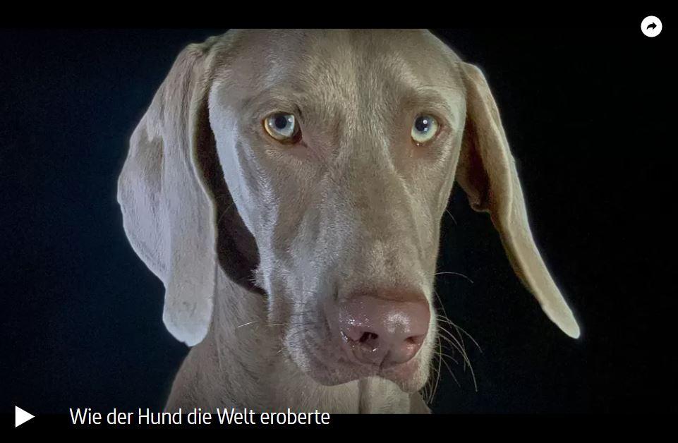 ARTE-Doku: Wie der Hund die Welt eroberte