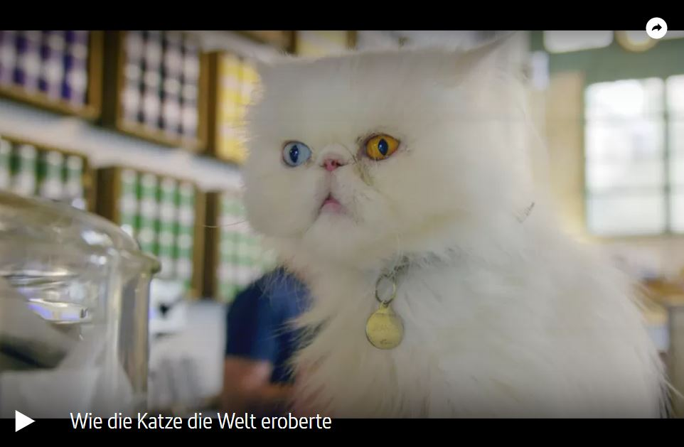 ARTE-Doku: Wie die Katze die Welt eroberte