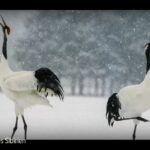 ARTE-Doku: Wildes Sibirien