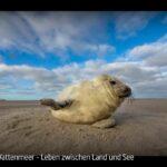 ARTE-Doku: Das Wattenmeer - Leben zwischen Land und See