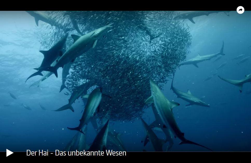 ARTE-Doku: Der Hai - Das unbekannte Wesen