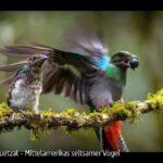 ARTE-Doku: Der Quetzal - Mittelamerikas seltsamer Vogel