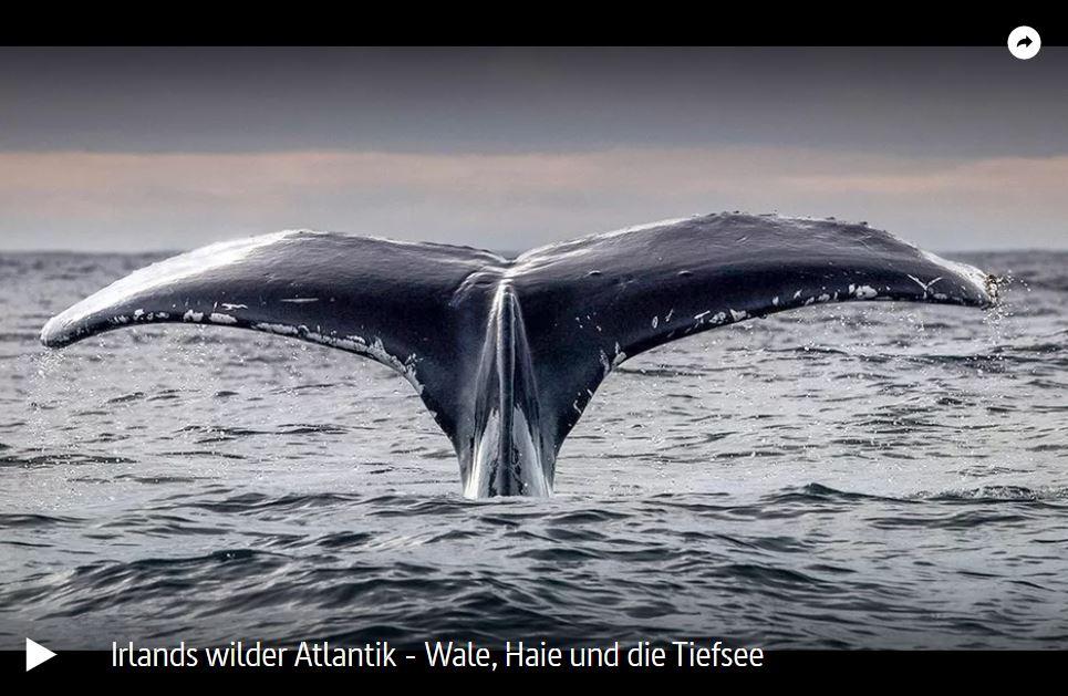 ARTE-Doku: Irlands wilder Atlantik - Wale, Haie und die Tiefsee