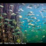 ARTE-Doku: Kroatien - Viele Flüsse, reiche Fauna