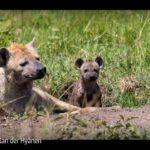 ARTE-Doku: Der Clan der Hyänen