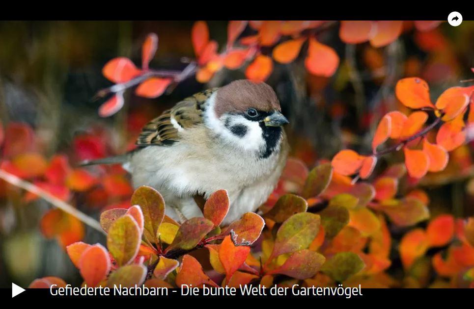 ARTE-Doku: Gefiederte Nachbarn - Die bunte Welt der Gartenvögel