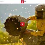 3sat-Doku: Land des Honigs