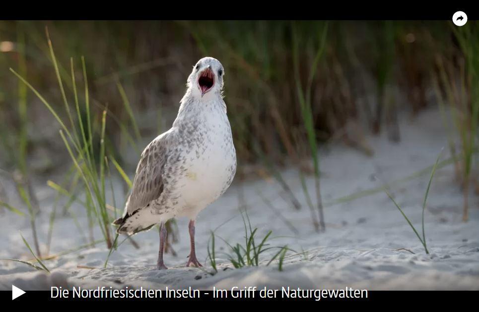 ARTE-Doku: Die Nordfriesischen Inseln - Im Griff der Naturgewalten