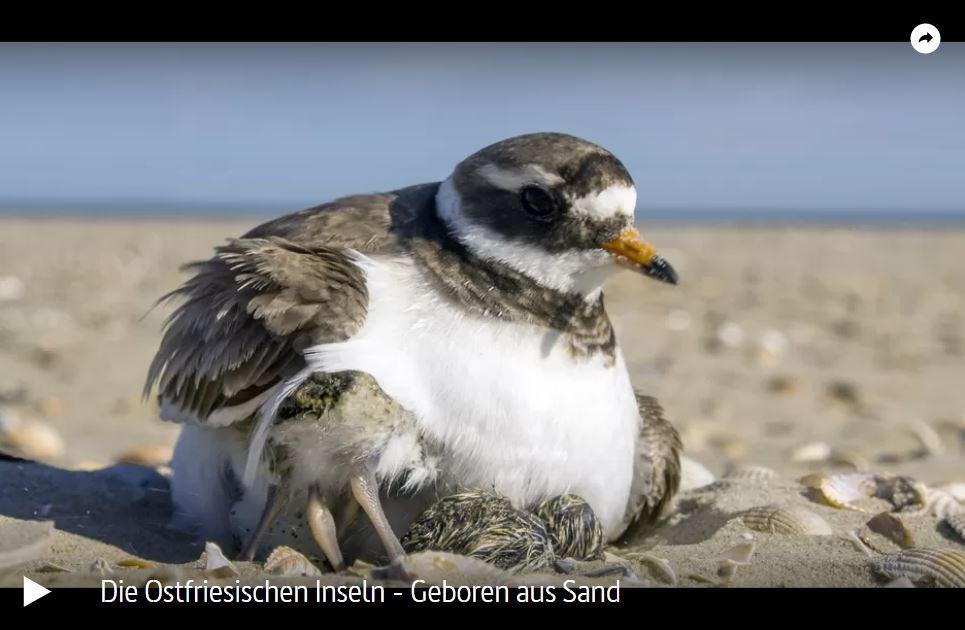 ARTE-Doku: Die Ostfriesischen Inseln - Geboren aus Sand