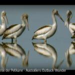 ARTE-Doku: Die Reise der Pelikane - Australiens Outback-Wunder