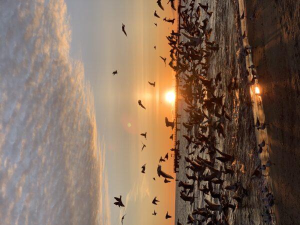 Vogel-Aufgang, Usedom