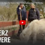 NDR-Doku: Archepark in MV - Ein Herz für Tiere in Not