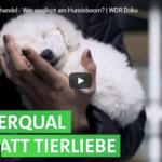 WDR-Doku: Illegaler Welpenhandel - Wer verdient am Hundeboom?