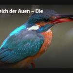 ARTE-Doku: Im Reich der Auen – Die Oker