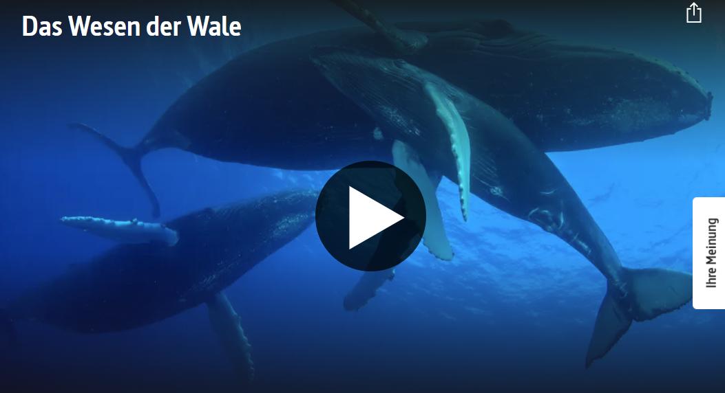 ARTE-Doku: Das Wesen der Wale