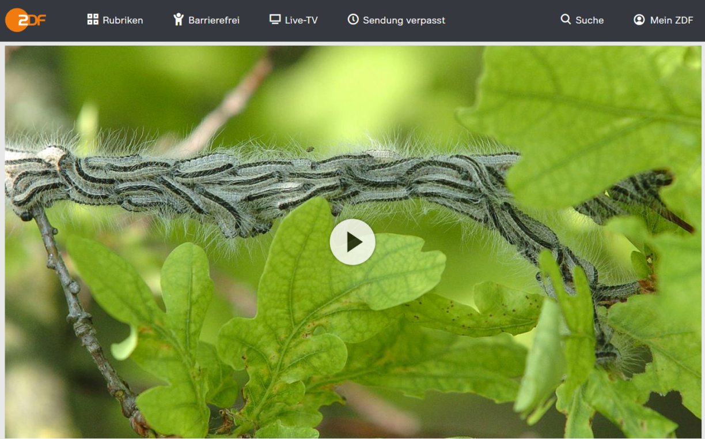 ZDF-Doku: Das Insekten-Mysterium - Zwischen Plage und Artensterben