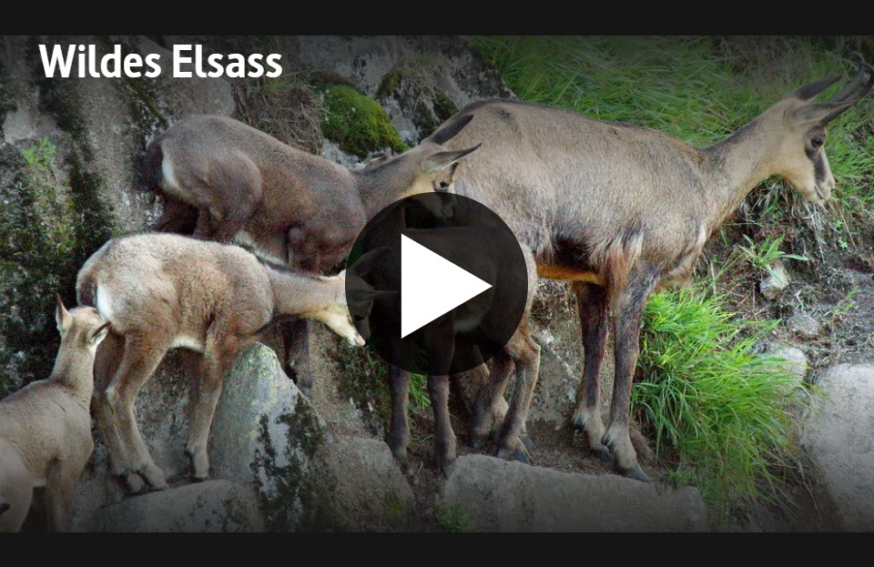 ARTE-Doku: Wildes Elsass